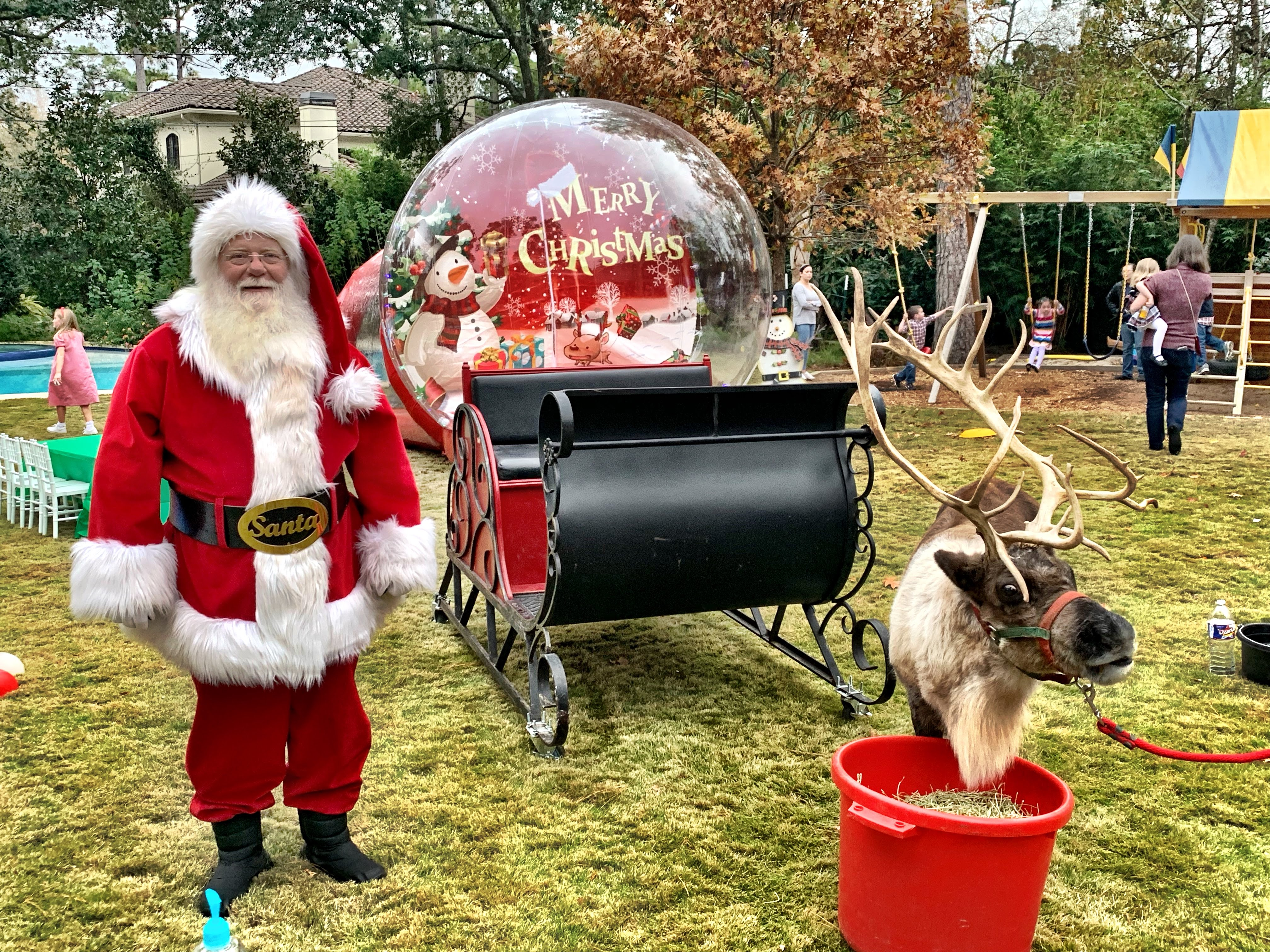 live reindeer with santa and sleigh